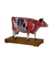 Anatomy model - cow
