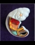 Anatomy model - pig embryo