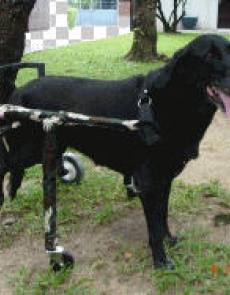 Wheel chair - dog