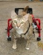 Wheel chair - cat