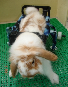 Wheel chair - rabbit